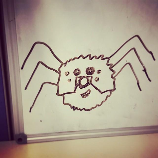 aao-spider-huntsman