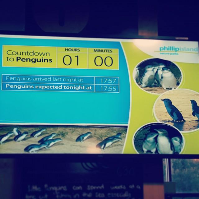 phillipisland_penquinparade_screen