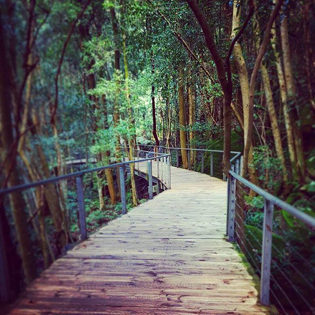 scenicworld-boardwalk-rainforest