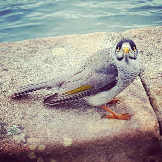 sydneyoperahouse-bird