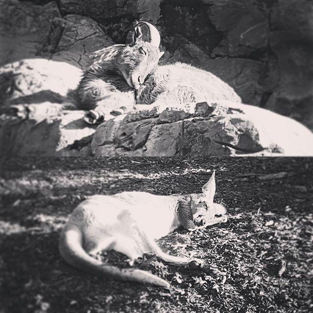 tarongazoo-cute-animals
