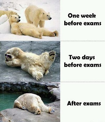 polarbears-exam